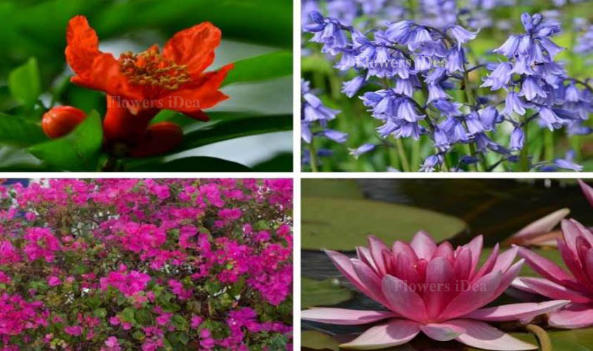 All Flowers You Can Grow in Water