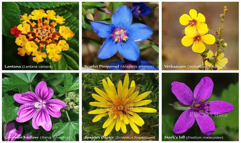 World's Best Smallest Flowers