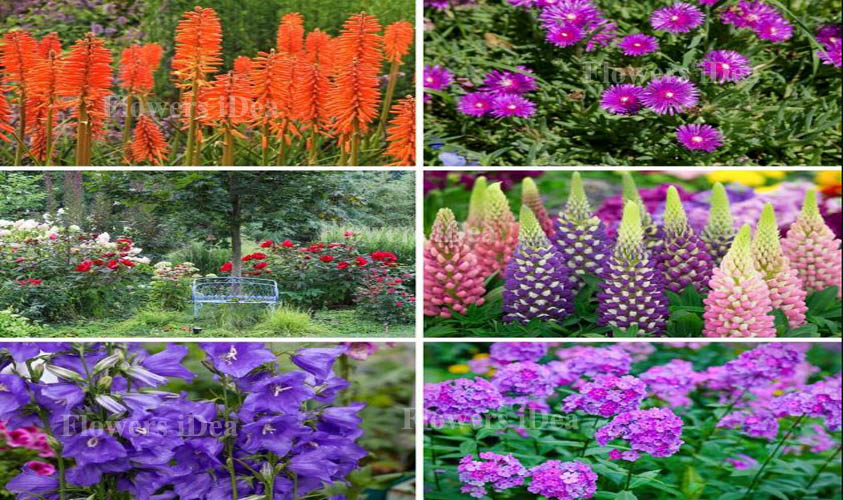 All flower in fall seasons