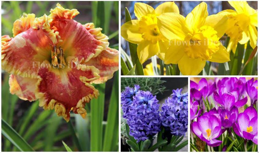 All flower Bloom in Spring