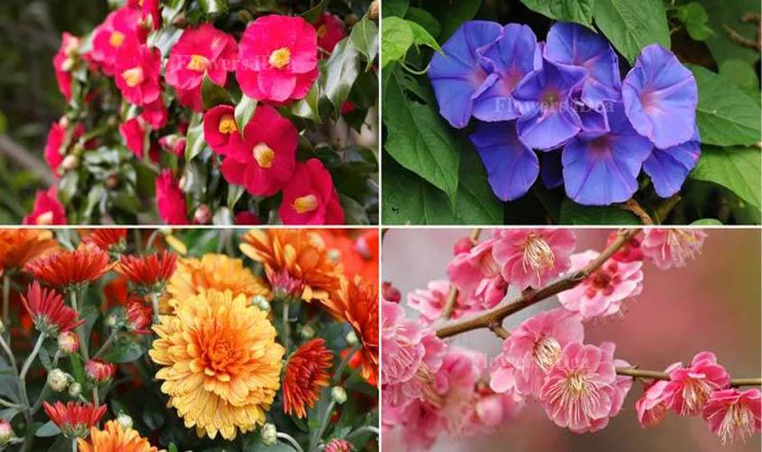 Beautiful Flowers Blooming Night