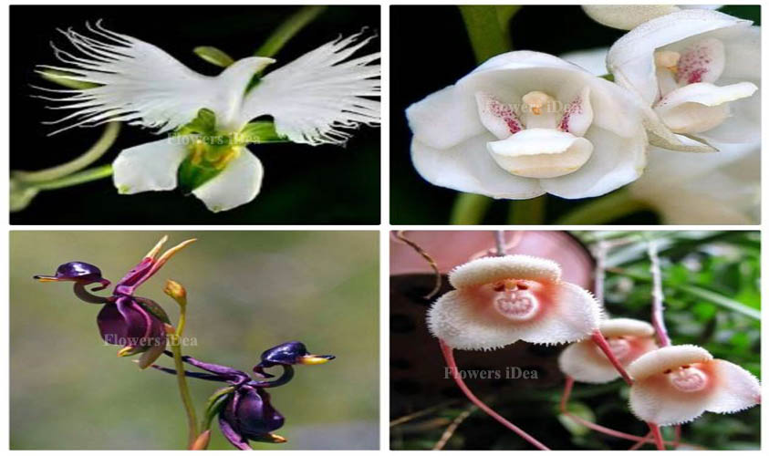 All Beautiful Orchids Flower