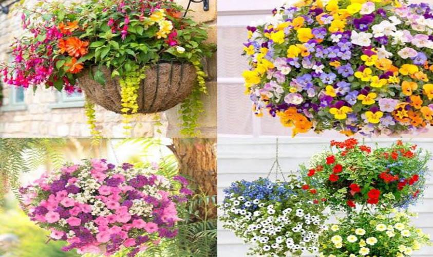 Hanging Baskets Flower
