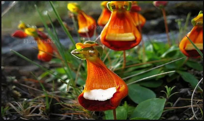 Happy Alien is Strange Looking Flower