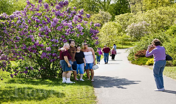 The Ideal Lilac Festival in Rochester, New York, U.S.A