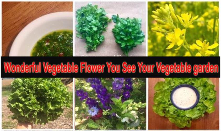 Wonderful Vegetable Flower You See Your Vegetable garden