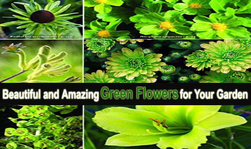 Beautiful and Amazing Green Flowers for Your Garden