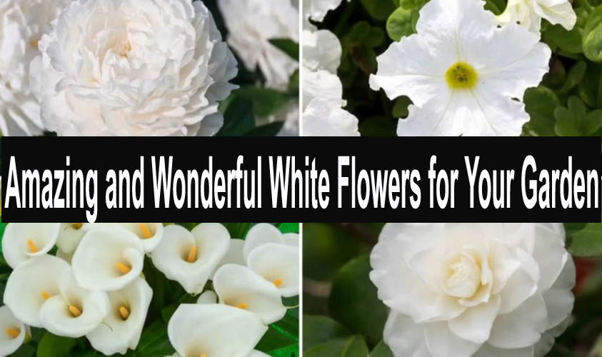 Amazing and Wonderful White Flowers for Your Garden