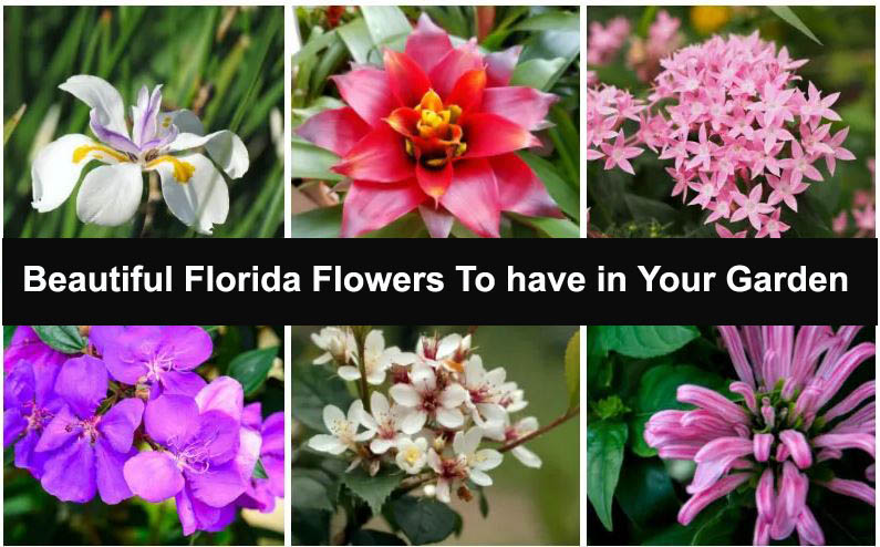 Florida's Amazing Flowers To have in Your Garden