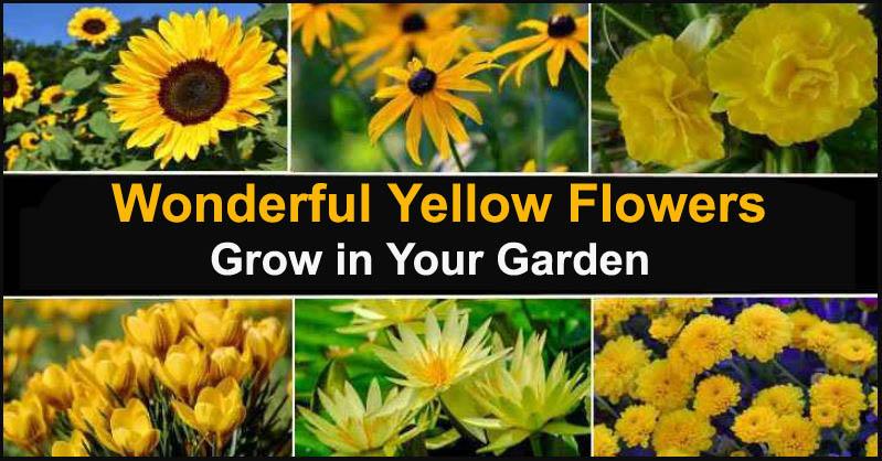 Wonderful Yellow Flowers Grow in Your Garden