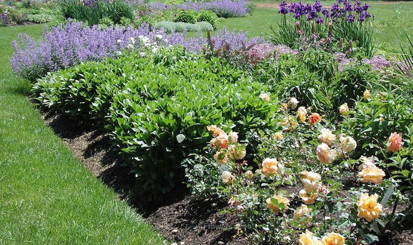Choosing Perennial Plants