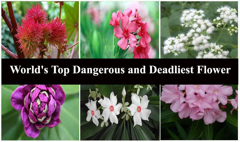 World's Top Dangerous and Deadliest Flower