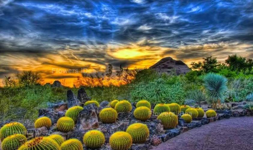 Desert Botanical Flowers Gardens