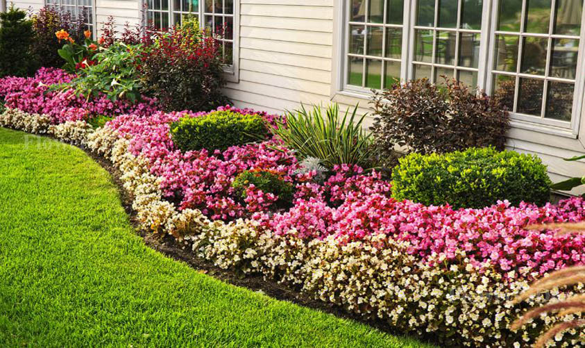 Flower Bed for Summer-long Blooms