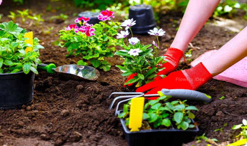 How to Grow a Successful Flowers Garden
