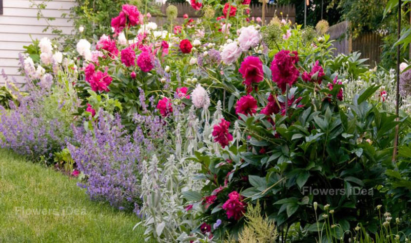 How to Select the Best Flowers to Plant in a Small Area Garden Ideas