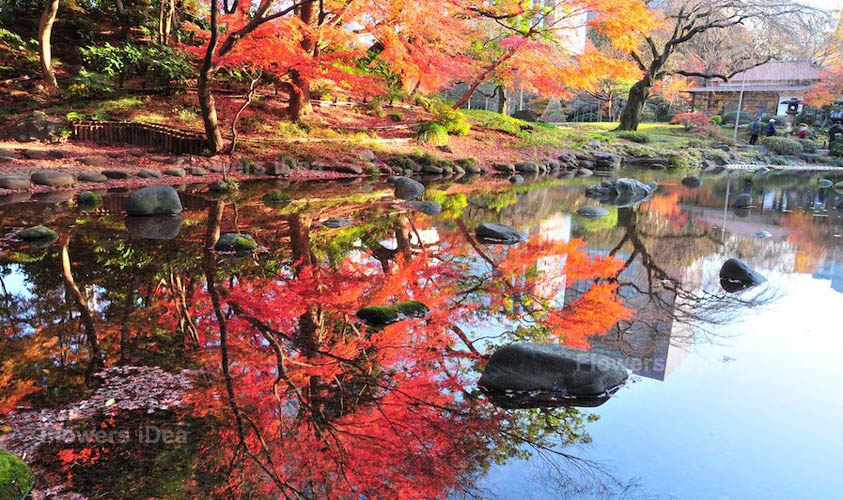 Koishikawa Korakuen Gardens Flowers Gardens
