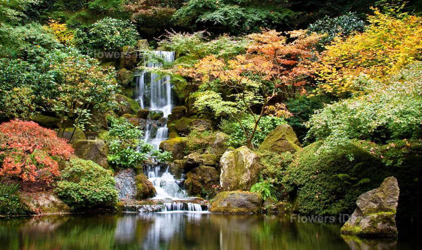 Portland Japanese Flowers Gardens