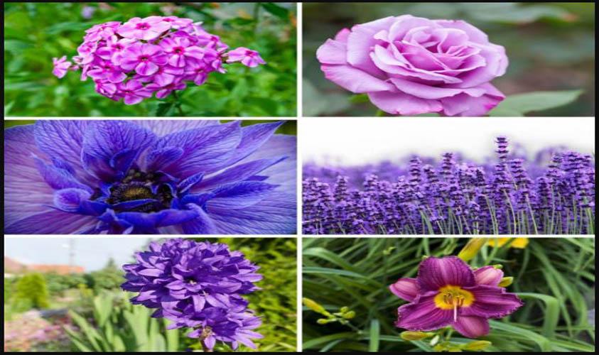 Purple Flowers for Summer