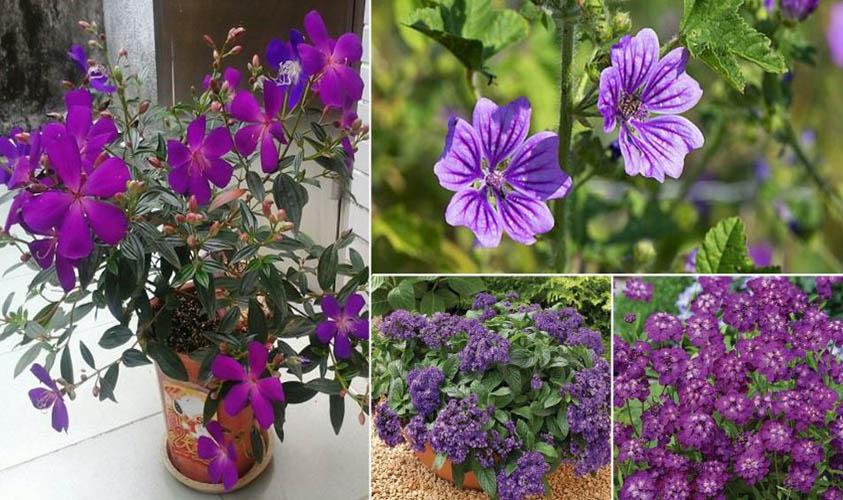 Purple Flowers for Winter