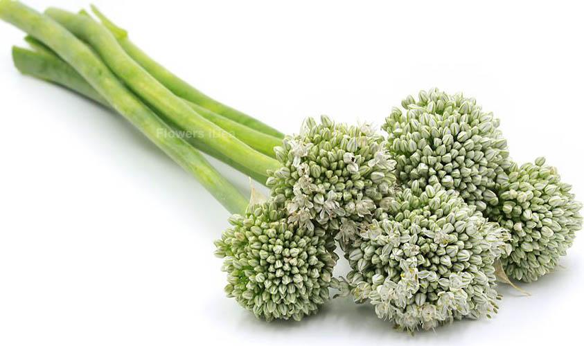 Scallions Vegetable Flower