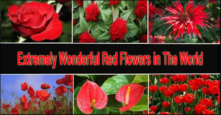 Extremely Wonderful Red Flowers in The World