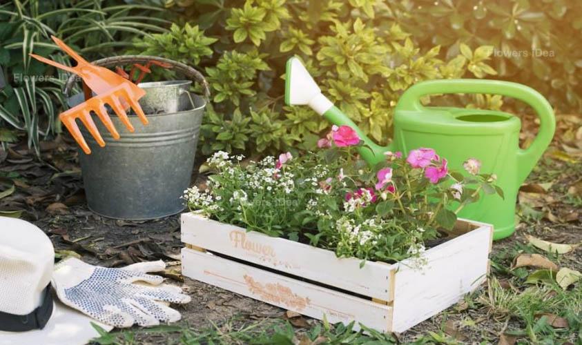 Starting Your Flowers Garden