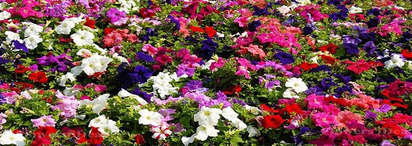 top 50 flowers