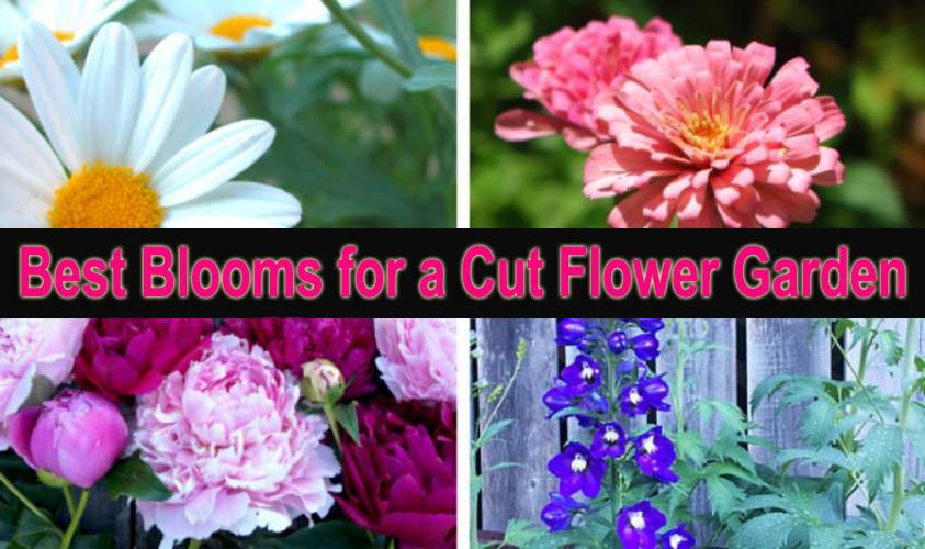 Best Blooms for a Cut Flower Garden