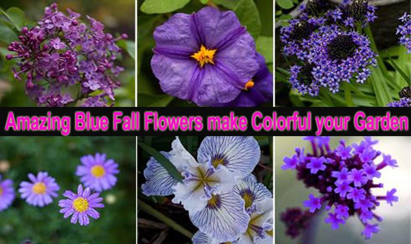 Blue Fall Flowers