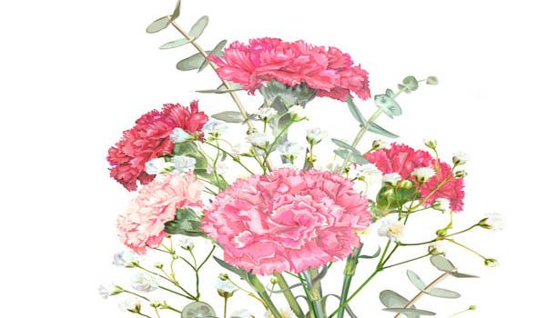 Carnation White Spring Flowers