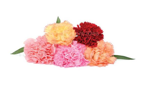 Carnation Orange Spring Flowers