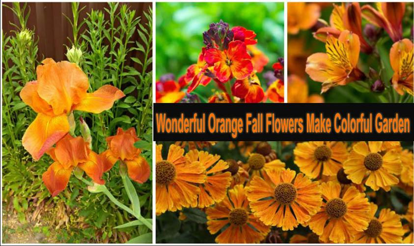 Wonderful Orange Fall Flowers Make Colorful Garden