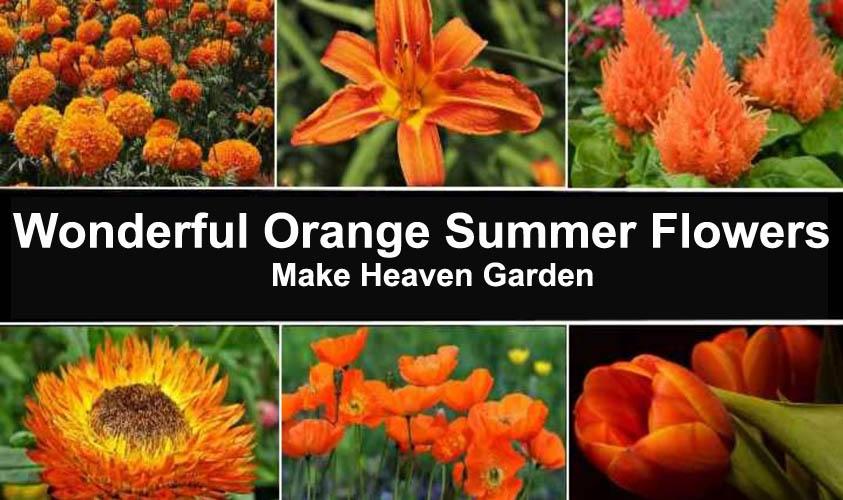 Best 10 Eye Catching Orange Summer Flowers Make Heaven Garden