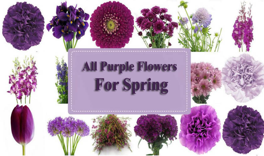 Amazing Purple Spring Flowers for your Home Outdoor Garden
