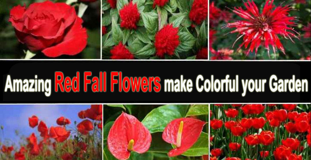 Amazing Red Fall Flowers make Colorful your Garden
