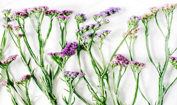 Sea Lavender Purple Fall Flowers