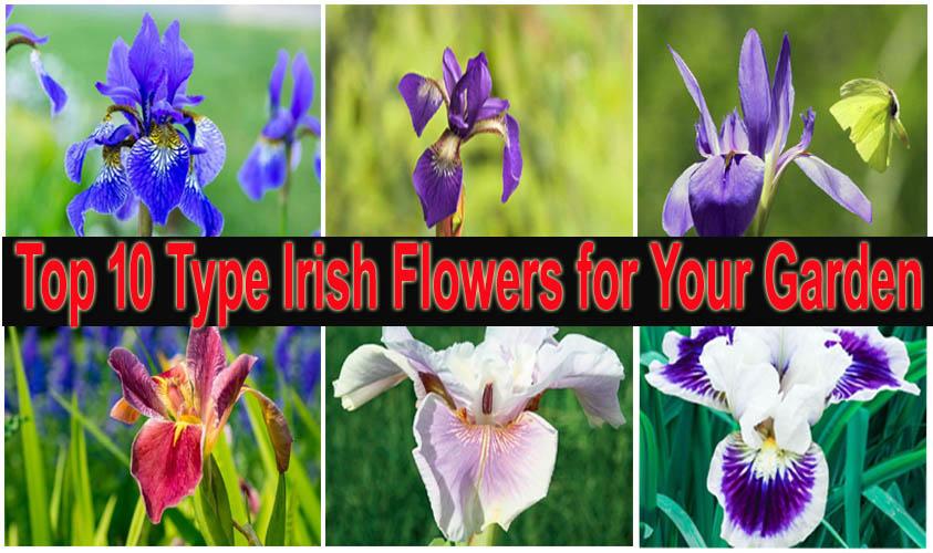 Top 10 Type Irish Flowers for Your Garden