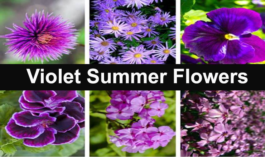 Wonderful Violet Summer Flowers Make Colorful Garden