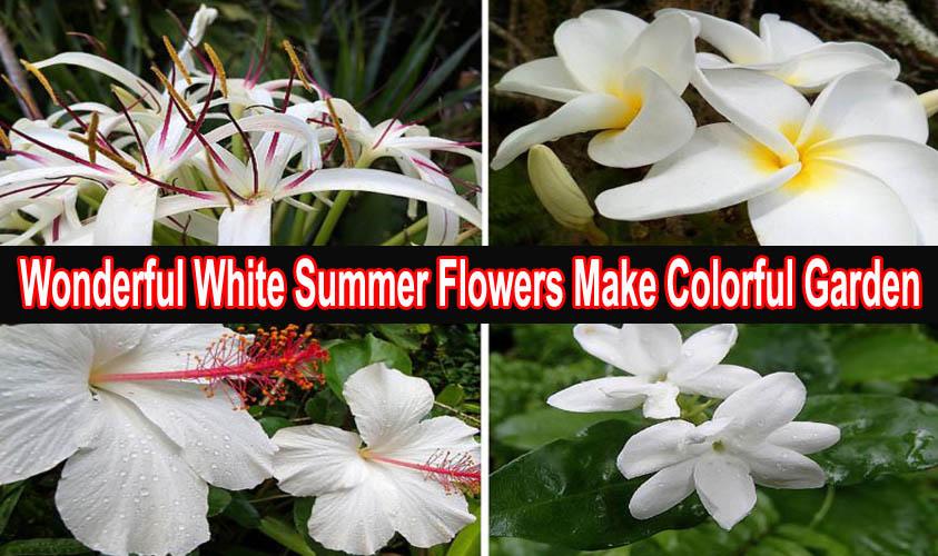 Wonderful White Summer Flowers Make Colorful Garden