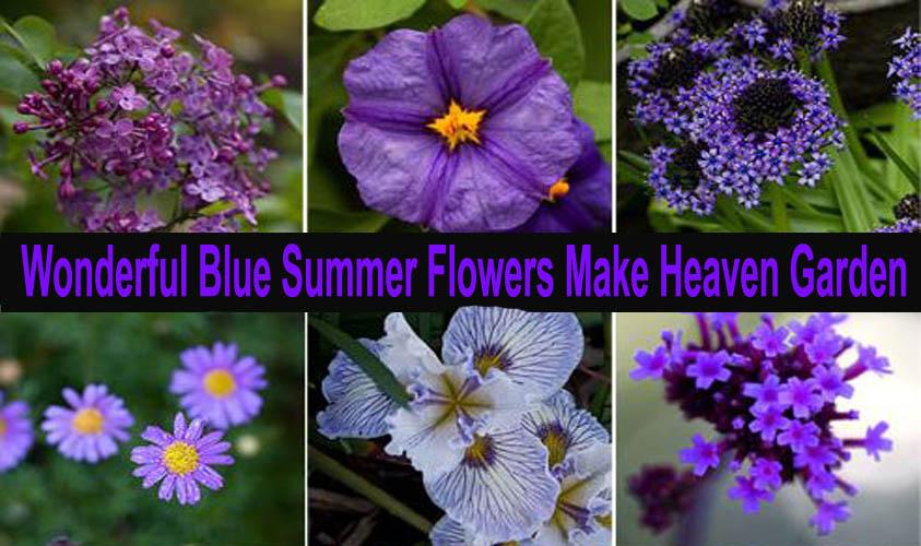 Wonderful Blue Summer Flowers Make Heaven Garden