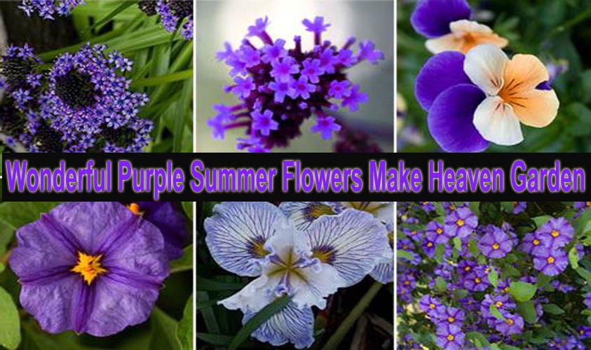 Wonderful Purple Summer Flowers Make Heaven Garden