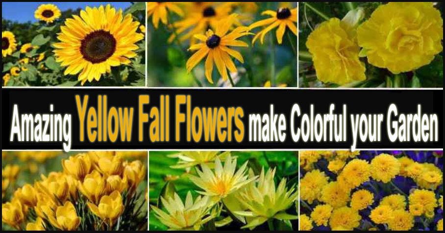 Amazing Yellow Fall Flowers make Colorful your Garden