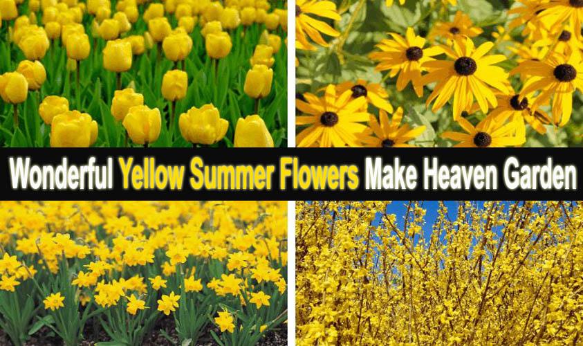 Wonderful Yellow Summer Flowers Make Heaven Garden