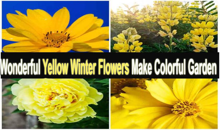 Wonderful Yellow Winter Flowers Make Colorful Garden